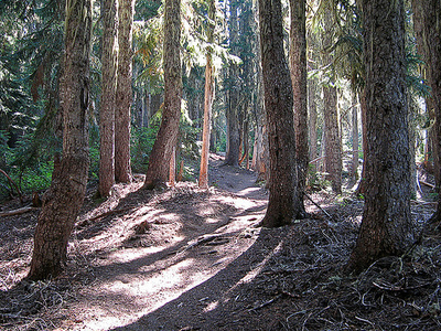 Four Peaks Trail 130 - Tonto National Forest - Arizona - USA