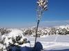 Fresh Snow In Eldorado