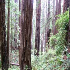 Friendship Ridge Trail