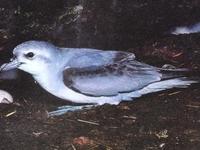 Puerto Davey Islas Área Importante para las Aves