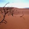 Médanos De Coro National Park