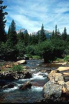 Creek At Fall River Pass