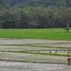 Farming At Caramoan National Park