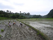 Farming At Caramoan