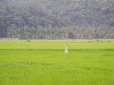 Farms At Caramoan