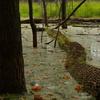 Claireville Wetlands