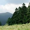 Field Pines Mountain