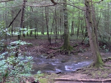 Fighting Creek