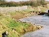 Fishing The Savick Brook