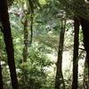 Forest Tiritiri Matangi