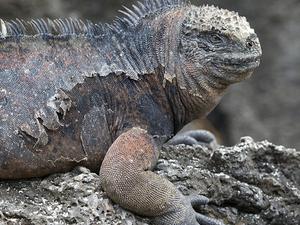 Galápagos em 4 dias
