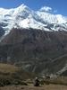 Gangapurna - Annapurna Himal & Manang Valley - Central Nepal