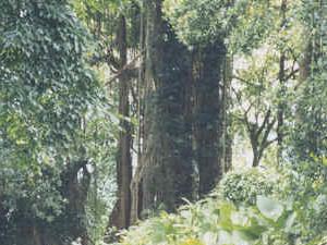 Garampani Santuario de Vida Silvestre