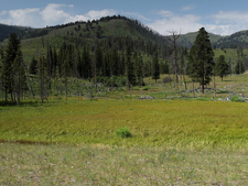 Garnet Hill Loop Trail - Yellowstone - USA