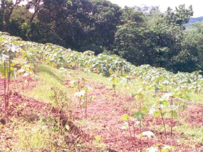 Garo Hills Meghalaya