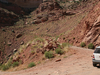 GenPic For Colorado Overlook Trail - Canyonlands - Utah - USA