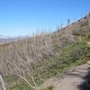 GenTrail-21 For Lower Quartz Lake Trail - Glacier - Montana - USA