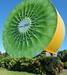 Giant Kiwifruit At Kiwi 360