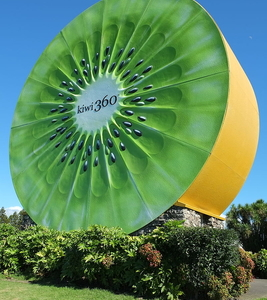 Giant Kiwifruit At Kiwi 360