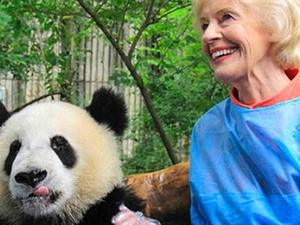 1 Day Dujiangyan Panda HoldingTour
