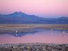 Gigante De Atacama - Chile