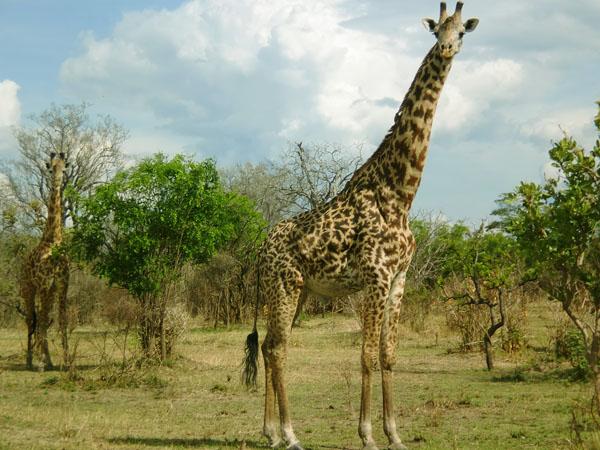 Trails Bagamoyo Town And Saadani National Park Photos