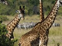 3 Day Masai Mara And 1 Day Lake Niavasha
