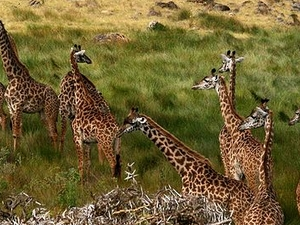 Day Excursions. Arusha National Park Photos