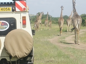 Affordable Kenya Safari Holiday Photos