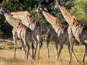 10 Day Botswana Safari Photos