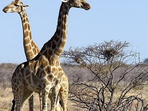 7 Day Namibia Desert And Etosha National Park (Camping) Fotos