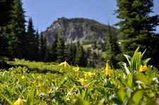 Glacier Basin Trail