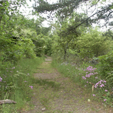 Goat Rock Trail