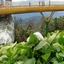 Golden Bridge Visit