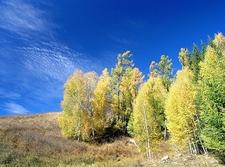 Golden Kanas Fall - Xinjiang