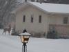 Golden  Valley  Minnesota Deer In Snow