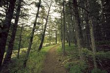 Gold Ridge Trail 47 - Tonto National Forest - Arizona - USA