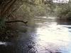 The Mulgrave River