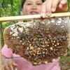 Gombizau Honey Bee Farm - View