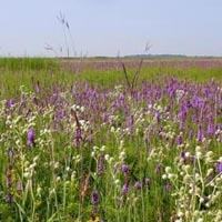 Goose Lake Prairie State Natural Area