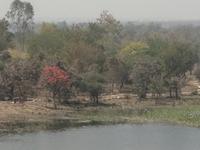 Gorewada Biopark (Zoo)