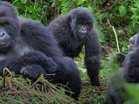 Gorilla Trekking Safari Adventure