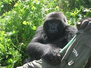 Bwindi Gorilla Trekking Lake Bunyonyi