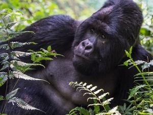 9 Days Uganda Gorilla Trekking Fotos