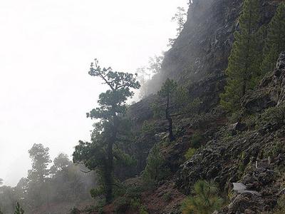 GR 131: El Baston