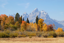 Grand Teton Autumn - Wyoming - USA