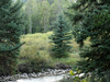 Granite Canyon Trail - Grand Tetons - Wyoming - USA