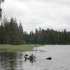 Gravelly Creek y área de picnic