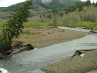 Grays River