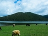 Grazing Animals In Pudacuo National Park